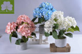 Славный Hydrangea Boquet t в баке &#160 цемента; для венчания