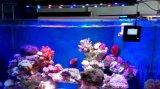 Фабрика света аквариума CE&RoHS СИД для промотирования