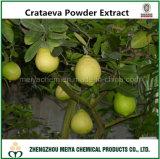 Выдержка порошка Crataeva Nurvala высокой очищенности естественная с Lupeol 98%