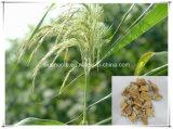 Poudre d'extrait de rhizome de roseau des prix d'approvisionnement d'usine la meilleure
