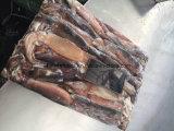 참치 미끼를 위한 Illex 오징어