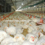 Высокое качество Full Set Poultry Equipment для Poultry Farming House