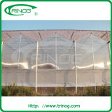 판매를 위한 폴리탄산염 농업 multispan 온실