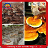 Ganoderma Lucidum (reishi) 포자 기름 최신 인기 상품