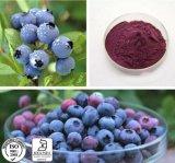 供給のAnti-Agingのための自然な草のエキスのBilberryのエキスのアントシアニン
