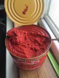 210g законсервировало законсервированный овощем затир томата для Бенина