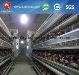 養鶏場装置Hのタイプ層の鶏のケージ