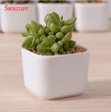 Decoración de escritorio creativa mini flor de cerámica blanca