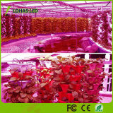 Наивысшая мощность СИД растет приспособление панели светильника спектра светлых шариков завода растущий полное для освещения парника крытого Hydroponic Flowering