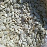ثلج بيضاء [بومبكين سد] حجم: [9كم], [10كم], [11كم], [12كم], [13كم], [14كم]