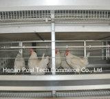 Poulの技術の熱い販売の繁殖動物の鶏のケージ(Hフレーム)