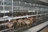 Petit système de cage de poulet (de poulette) ou matériel de ferme avicole