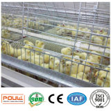 De volledige Automatische Apparatuur van de Kooien van de Kip van de Jonge kip voor Verkoop (een Frame van het Type)