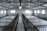 Anti-Corrosion 직류 전기를 통한 강철 가금은 유숙하거나 닭장