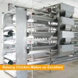 Tianrui Meilleur design Durable Automatique H Cadre Batterie Couche Poulet Cage