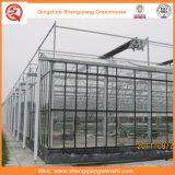 Chambre verte en verre de pomme de terre/tomate avec le système de ventilation