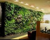 Piante di alta qualità e fiori artificiali del giardino verticale Gu-Mx2091435