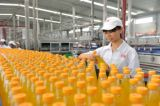 Impianto di lavorazione commerciale del succo di frutta del mango della strumentazione elaborante del succo di frutta della spremuta della macchina industriale dell'estrattore