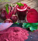 Natürliches Pigment-rotes Saft-Rüben-Wurzel-Puder