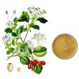 Hawthorn Fruit P.E. (dn-21)