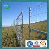 2X2 Galvanized Welded Wire Mesh für Fence Panel