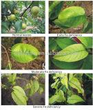 Meststof van het Humusachtige Zuur van 60% de Organische voor Landbouw