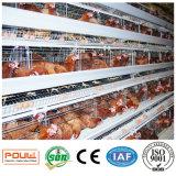 Горячая гальванизированная стандартная клетка слоя цыпленка оборудования цыплятины