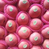 Calidad superior del rojo fresco de la manzana roja de FUJI