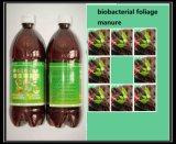 organisches Blatt- Düngemittel mit Meerespflanze-Auszug