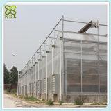 Estufa hidropónica solar do plástico do passatempo de China