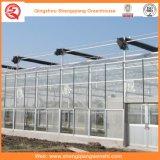 Serre chaude en verre de pomme de terre/tomate avec le système de ventilation