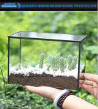 Plantador geométrico de cristal claro cuboide del invernadero del terrario del rectángulo