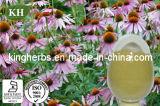 Extrait 2%, 2.5%, acide de Purpurea d'echinacée de 4% Cichoric ; Polyphénols 2%, 4% 7% ;