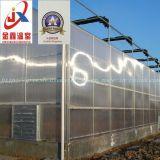 Парник листа поликарбоната для миниый расти томата