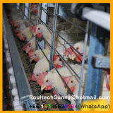 4つの層自動熱い電流を通されたHのタイプ鶏の層のケージ