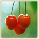 Saem as cerejas convenientes enlatadas