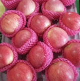 Nueva Cosecha con buena calidad fresca Qinguan de Apple