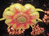 Цветастое подгонянное 2014 новое украшение раздувное Star/Flower-1m~10m освещения луча венчания/Party/Club