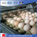Matériel durable de ferme avicole d'oeufs de poulet de bâti en acier