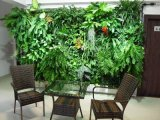Заводы высокого качества искусственние и цветки зеленой стены Gu-Wall009087110