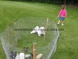 Загородка или цыплятина сада арретируют шестиугольное плетение провода