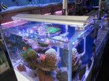 iluminação do aquário do diodo emissor de luz 24*3W para o tanque de Fish&Reef