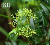 Estratto Dihydromyricetin del tè della vite di alta qualità per il supplemento nutrizionale
