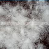 L'anatra bianca o grigia lavata vendita giù mette le piume a
