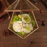 Promotiona preservó la flor para la decoración casera de la boda
