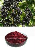 Heiße verkaufende natürliche Schwarze Johannisbeere-Auszug-Anthocyanin 10%, 25%