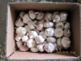 메시 Bag Packing 5.5cm Fresh Normal White Garlic