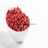 Grains rouges chinois d'arachide de peau