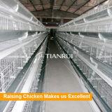 최신 유형 자동적인 닭장 나이지리아에 있는 놓는 암탉을%s 판매