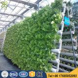 야채를 위한 정원 온실 PVC 수경법 시스템